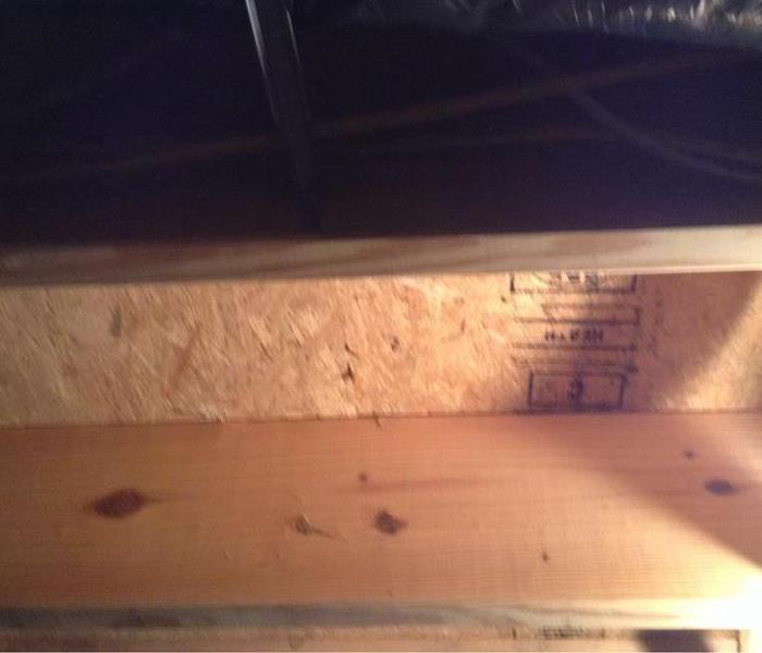Mold in basement After